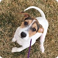Adopt A Pet :: Carmen - Fort Collins, CO