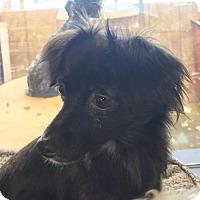 Adopt A Pet :: Jenny O - Long Beach, CA