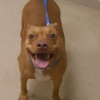 Adopt A Pet :: Pippin - Wooster, OH