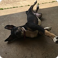 Adopt A Pet :: DRACO - HAGGERSTOWN, MD
