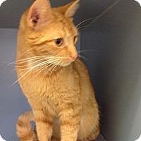 Adopt A Pet :: Sunshine - Lake Charles, LA