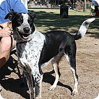 Adopt A Pet :: Deuce - Siler City, NC