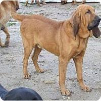 Adopt A Pet :: Jethro 2 - Carrollton, GA