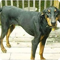 Adopt A Pet :: Rocky--adopted!! - New Richmond, OH