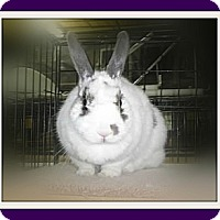 Adopt A Pet :: Daisy Lu - Williston, FL