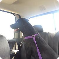Adopt A Pet :: Maverick - El Campo, TX