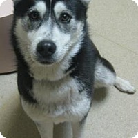 Adopt A Pet :: Roxy - Gary, IN