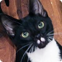 Adopt A Pet :: Panther - Irvine, CA