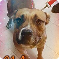 Adopt A Pet :: Clyde - Odessa, TX
