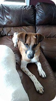 Shepherd (Unknown Type) Mix Dog for adoption in Lima, Pennsylvania - Jax