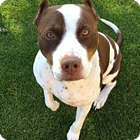 Adopt A Pet :: Sweet Einstein-URGENT - Burbank, CA
