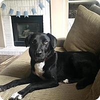 Adopt A Pet :: Happy - Denver, CO