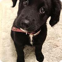 Adopt A Pet :: Adela - Houston, TX