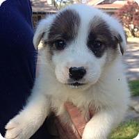 Adopt A Pet :: Patty - Memphis, TN