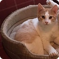 Adopt A Pet :: Cilantro - Hammond, LA