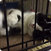 Adopt A Pet :: Oreo - Byron Center, MI