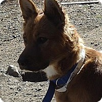 Adopt A Pet :: Lacey - Ashland, OR
