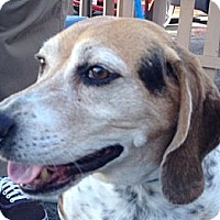 Adopt A Pet :: Cody - Canoga Park, CA