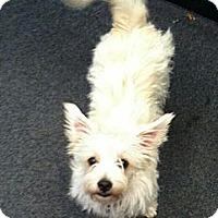 Adopt A Pet :: Daisy - Costa Mesa, CA