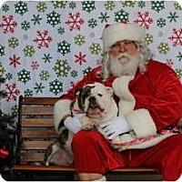 Adopt A Pet :: Belle - Gilbert, AZ
