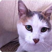 Adopt A Pet :: Meeka - Chicago, IL