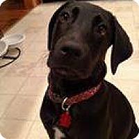 Adopt A Pet :: Joel - Marlton, NJ