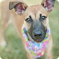 Adopt A Pet :: Nina - Kingwood, TX