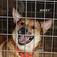 Australian Kelpie Mix Dog for adoption in Lone Oak, Texas - Rocky