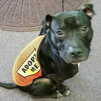Adopt A Pet :: Grover - Patterson, NY