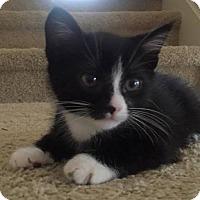 Adopt A Pet :: UNO - Nolensville, TN
