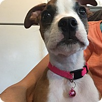 Adopt A Pet :: Dallas - grants pass, OR