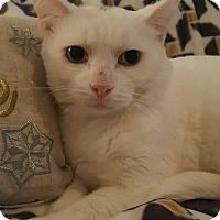 Adopt A Pet :: Casper - Staten Island, NY