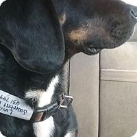 Adopt A Pet :: Lincoln - Shelter Island, NY