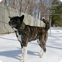 Adopt A Pet :: Fergie - Toms River, NJ