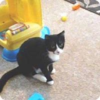 Adopt A Pet :: NAS - Putnam, CT