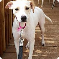 Adopt A Pet :: Maize - Mesa, AZ