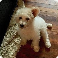 Adopt A Pet :: Lily - Coldwater, MI