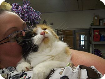 Domestic Longhair Cat for adoption in Walnut, Iowa - Patsy