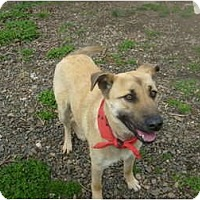 Adopt A Pet :: Lila - Eden, NC