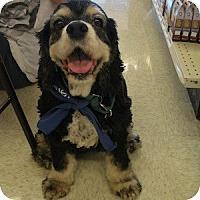 Adopt A Pet :: Hatti - Phoenix, AZ