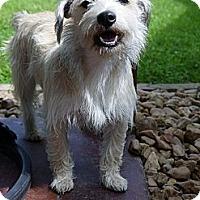Adopt A Pet :: Blondie - Baton Rouge, LA