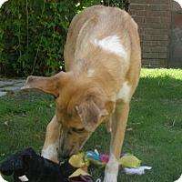 Adopt A Pet :: Reese - Riverside, CA