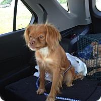 Adopt A Pet :: JEWELI - ROCKMART, GA