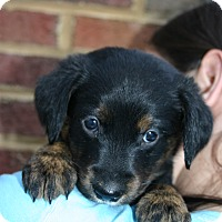 Adopt A Pet :: Martha - Knoxvillle, TN