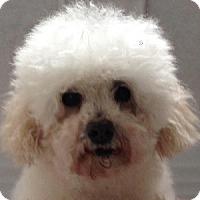 Adopt A Pet :: Noodles - La Costa, CA