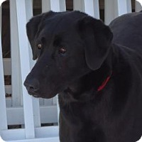 Adopt A Pet :: Olivia - Evans, CO