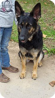 German Shepherd Dog Dog for adoption in Gustine, California - BELLA