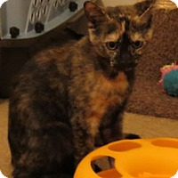 Adopt A Pet :: Lisa - Kitten - Harrisburg, PA