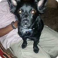 Adopt A Pet :: Bee - Tucson, AZ