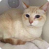 Adopt A Pet :: IAN - Camarillo, CA